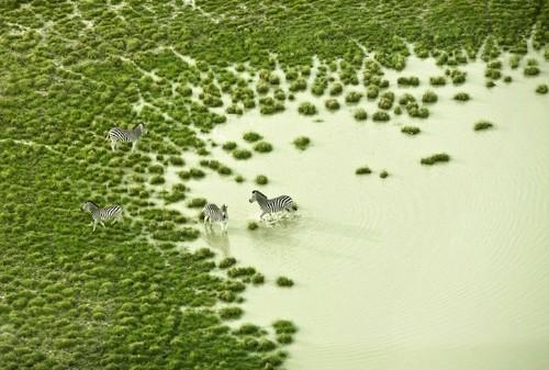 Stunning Aerial Photos of Botswana Wildlife