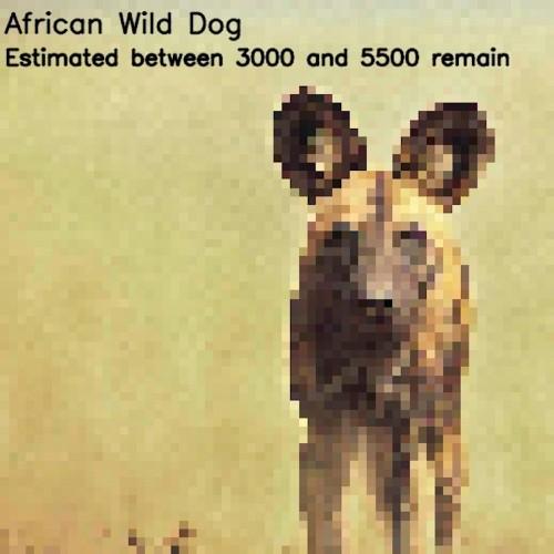 Imágenes borrosas usan pixeles para representar especies en peligro