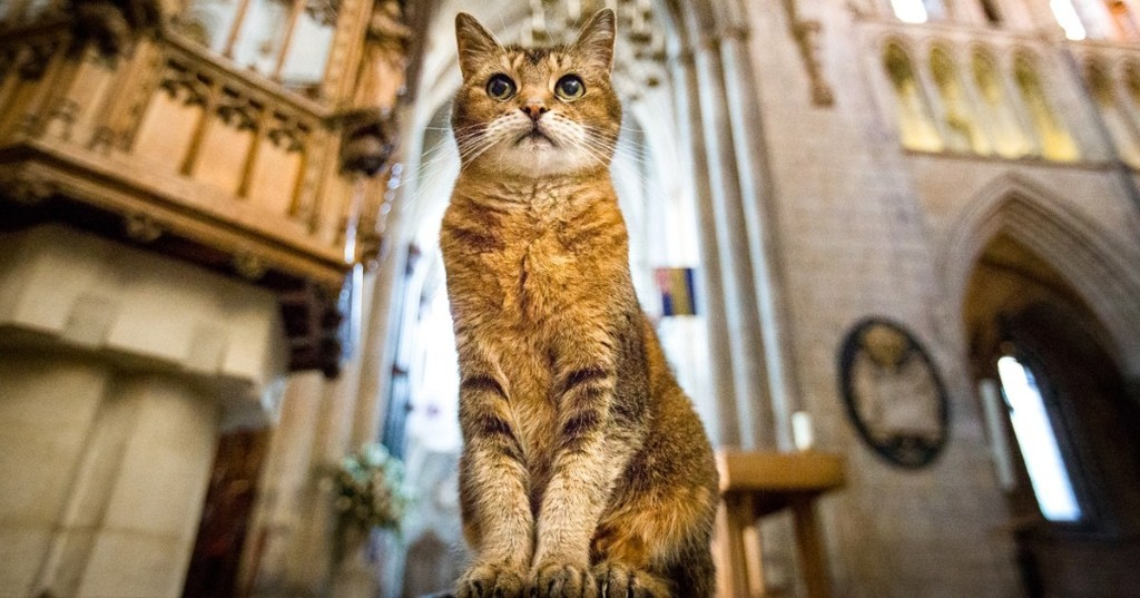 Beloved Stray Cat Is Given a Memorial Service at the Church She Called Home for 12 Years