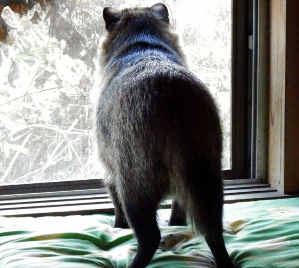 Rescued Raccoon Dog Is an Adorable Japanese Pet the Internet Is in Love With