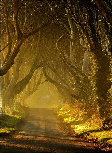 The Dark Hedges: Ireland's Beautifully Eerie Tree-Lined Road