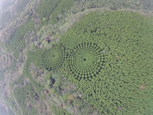 "Mysterious ""Crop Circle"" Forest in Japan Is the Result of a 50-Year-Old Experiment"