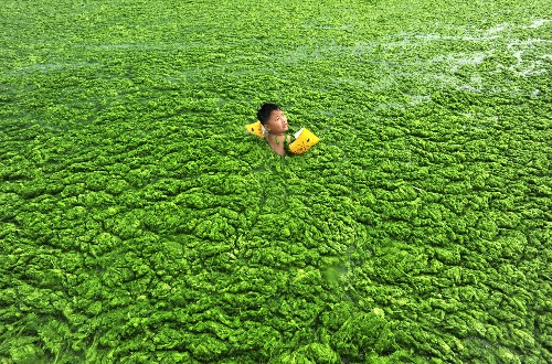 Pictures: Extreme Algae Blooms Expanding Worldwide