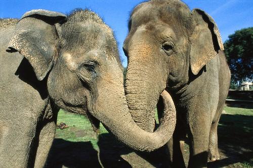 Surprise: Elephants Comfort Upset Friends