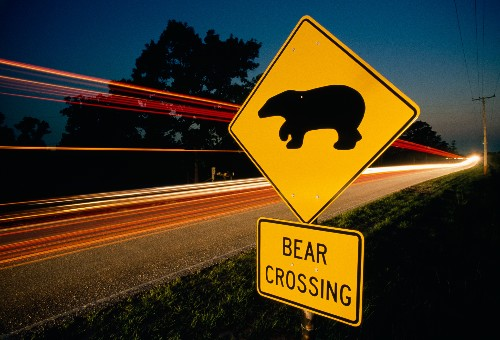 Why Are Black Bear Attacks Up in Florida?