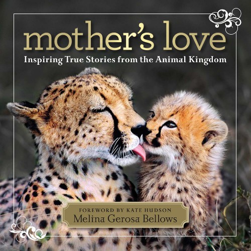 Mother's Love Photo Gallery