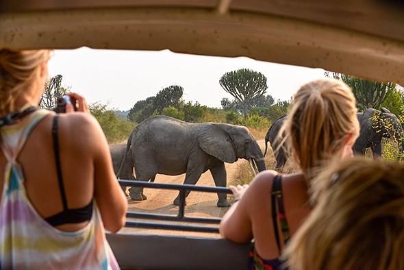 Tips for a Stress-Free Safari
