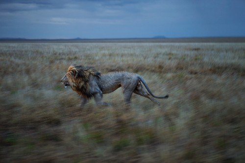 Will Humans Survive the Sixth Great Extinction?