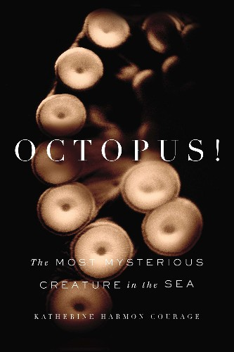 Journey of Octopus Discovery Reveals Them to Be Playful, Curious, Smart