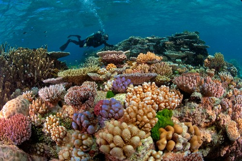 Great Barrier Reef: Through the Lens of David Doubilet