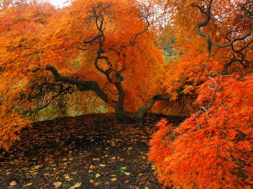 Gorgeous photos of autumn in the United States