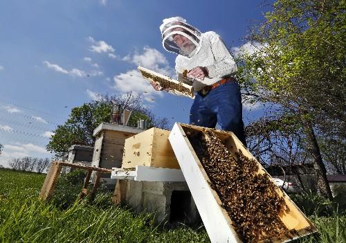 U.S. Honeybee Losses Not as Severe This Year