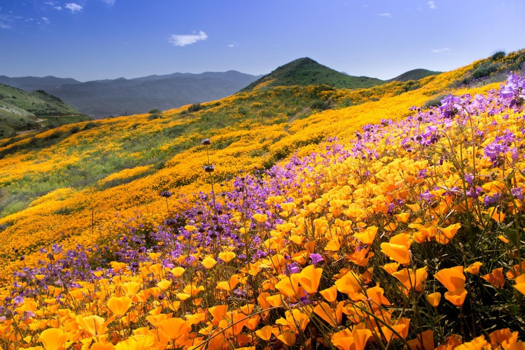 Flower power: 10 of the world's best destinations for blooms