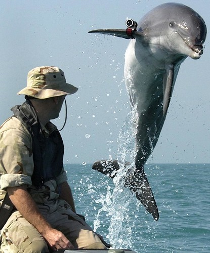 Military Dolphins and Sea Lions: What Do They Do and Who Uses Them?