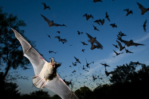National Bat Week Pictures: Just in Time for Halloween!