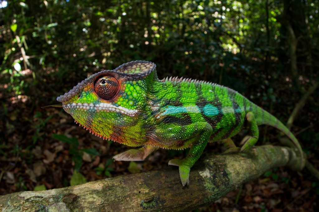 Color-changing animals, explained