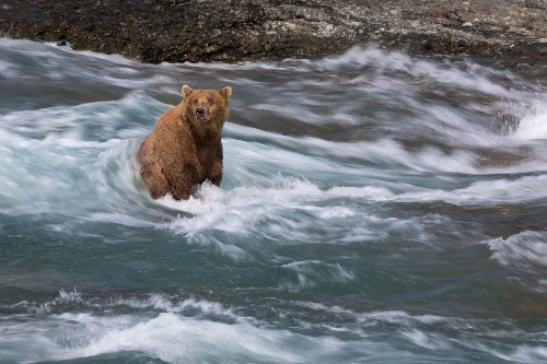 Alaska is the best place to see wild bears. A new mine could change that.