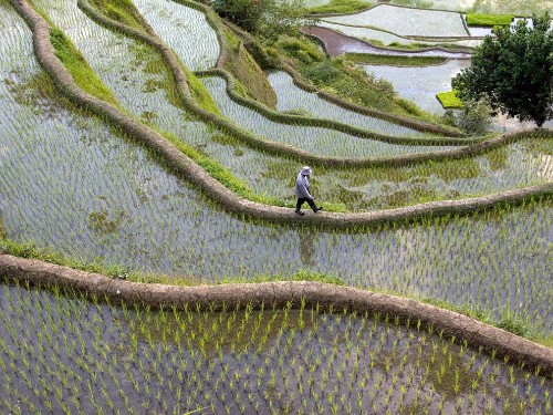 Explore the Emerald Rice Terraces of the Philippines