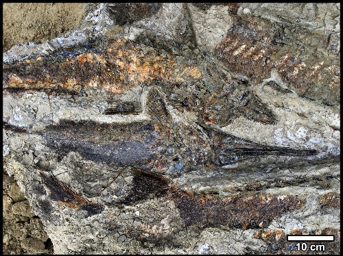 These fossils may capture the day the dinosaurs died. Here's what you should know.