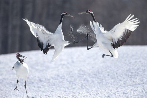 The Black Belt Photo by Shan W — National Geographic Your Shot