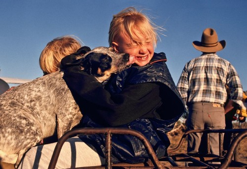 Many Animals—Including Your Dog—May Have Horrible Short-Term Memories