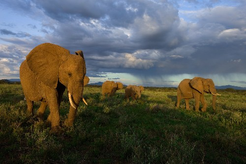 Elephant ivory trade talks heat up in Geneva
