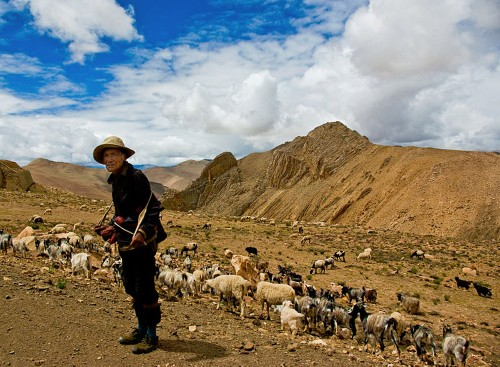 Extinct Humans Passed High-Altitude Gene to Tibetans