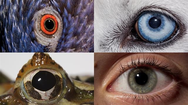 Watch This Video to See Through an Animal's Eyes