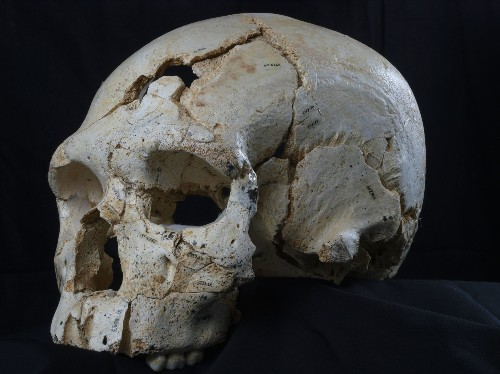 World's Oldest Murder Mystery Was 430,000 Years in the Making