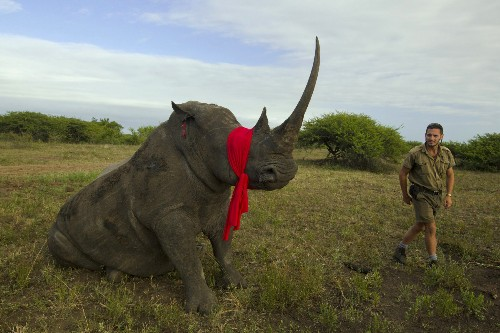 Largest Rhino Airlift Ever to Move 100 At-Risk Animals