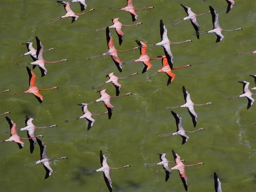 """Flamingos Apply """"Makeup"""" to Impress Mates"""