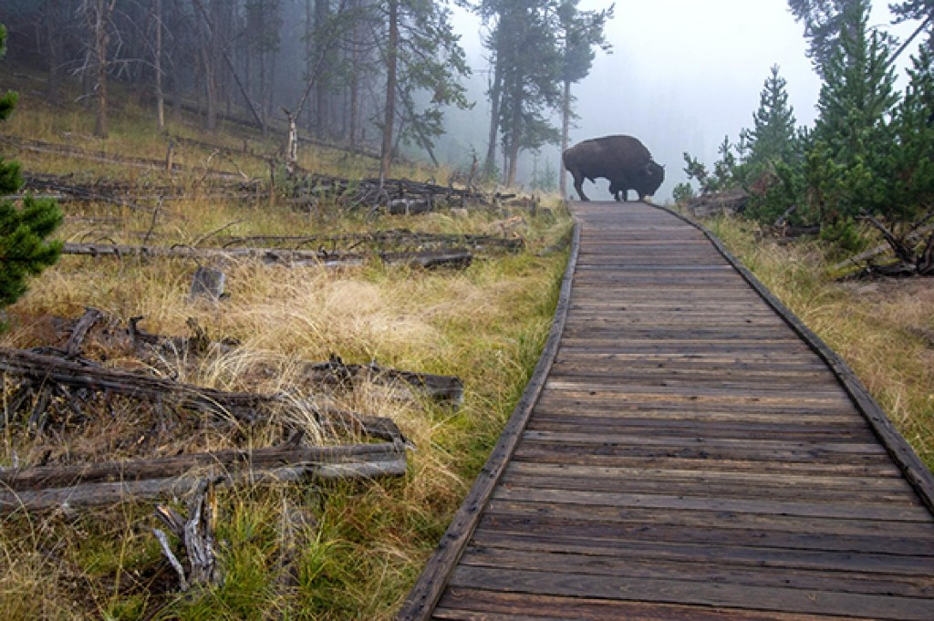 A Park Ranger's Guide to Yellowstone