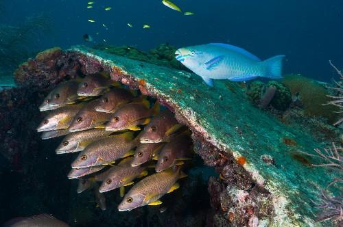 U.S. Invites Public to Submit Nominations for Marine Sanctuaries