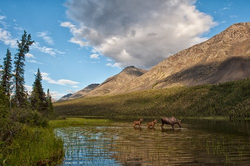 """Victory for Yukon Wilderness Is """"Game-Changer"""""""
