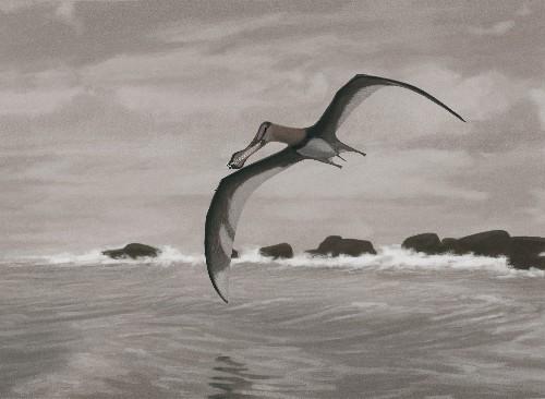 Sciencespeak: Pteroid