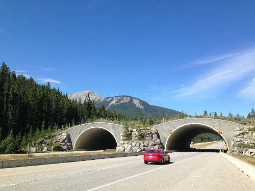 The Alberta Story: Wildlife Crossing in Banff