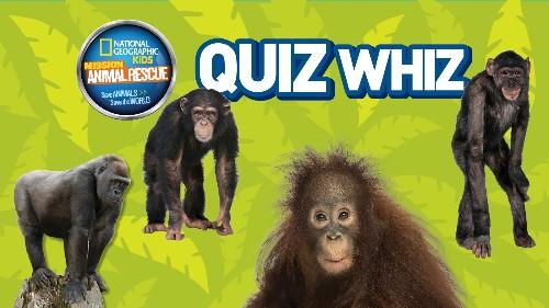 Quiz Whiz: Great Apes