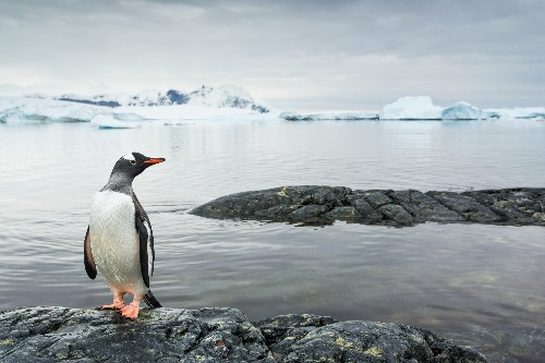 Did Ancient Climate Change Spur Penguin Evolution?