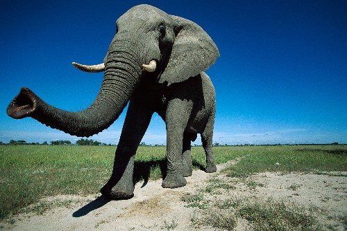 How Do Elephants and Other Animals Sneeze?