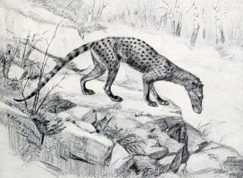 Carnivorous Fossil Beast Lived Like a Civet