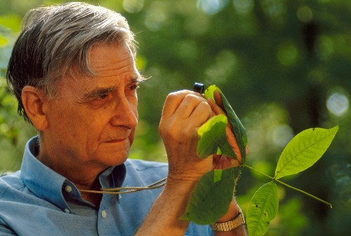 E.O. Wilson at 90: The conservation legend shares dreams for the future