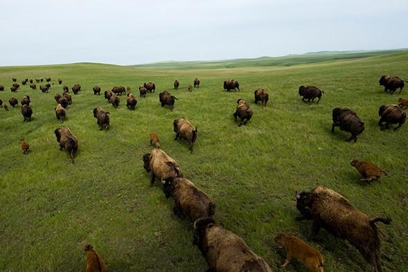 Great Family Trips: South Dakota