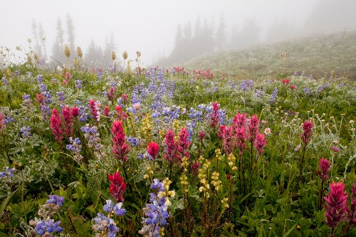 Everything to know about Mount Rainier National Park