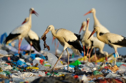 Why do ocean animals eat plastic?
