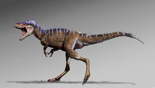 New tiny tyrannosaur helps show how T. rex got big