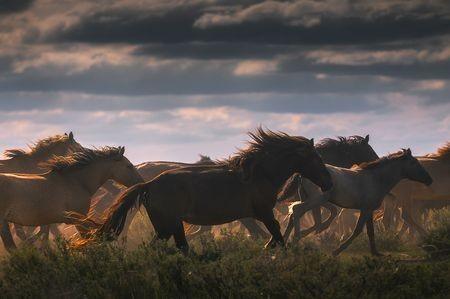 Freedom Photo by Erdenebulgan BnBz — National Geographic Your Shot