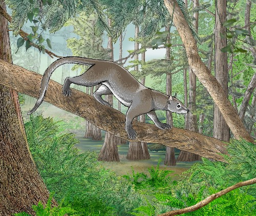 Ancient Arboreal Mammal Discovered at Root of Carnivore Family Tree
