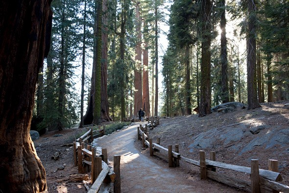 The Pursuit of Happiness: Sequoia Style