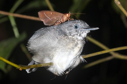 These Moths Drink the Tears of Sleeping Birds