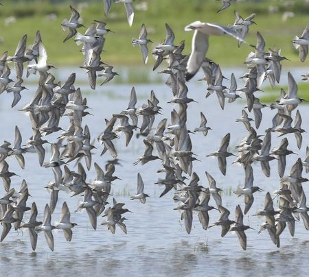 migration Photo by jim west — National Geographic Your Shot